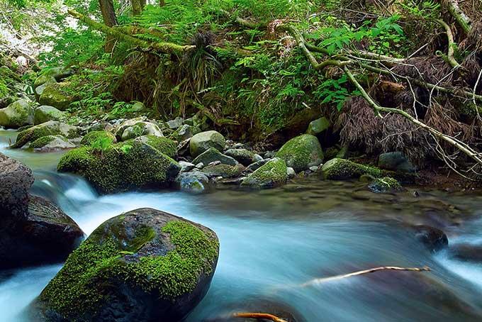 「木に縁りて魚を求む」の意味・使い方・類語を紹介!例文付き【故事成語で自己啓発】